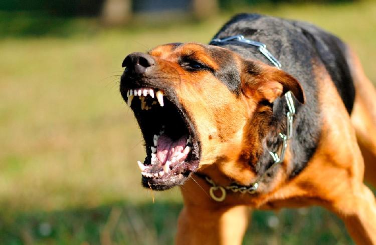 Que hago si me ataca un perro agresivo