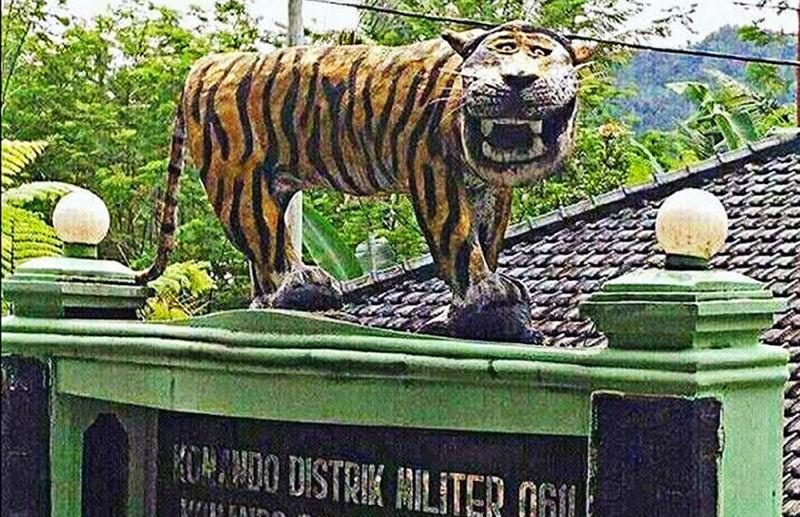 Tigre feo