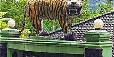Relacionada tigre feo