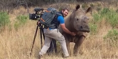 Relacionada rinoceronte pide le rasquen panza