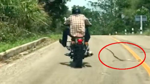 Serpiente moto
