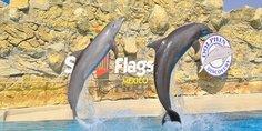 Relacionada dolphin discovery six