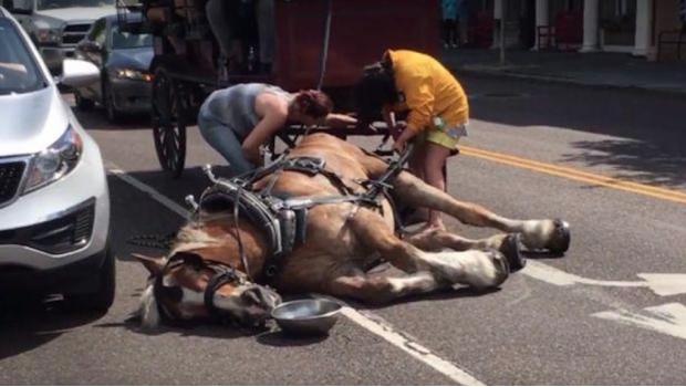 Un caballo se desvanece mientras llevaba un carruaje con turistas