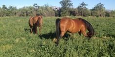 Relacionada caballos rescatados