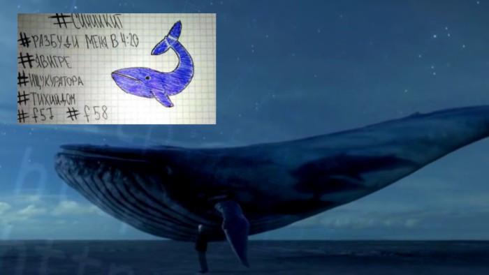 Fotos y videos de la ballena azul 2