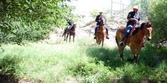 Relacionada caballos