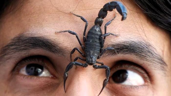 Se demora vuelo de United Airlines por un escorpión