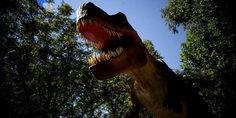 Relacionada encontraron fo sil de dinosaurio  completo