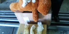 Relacionada oso de peluche drogas