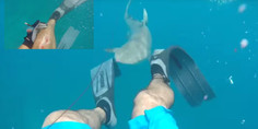 Relacionada tibur n ataca a buzo video