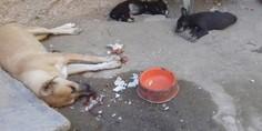 Relacionada matanza de perros en parral