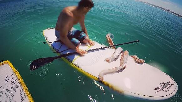 Calamar gigante ataca a surfista en Sudáfrica