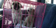 Relacionada exhorta ecologi a a denunciar maltrato animal