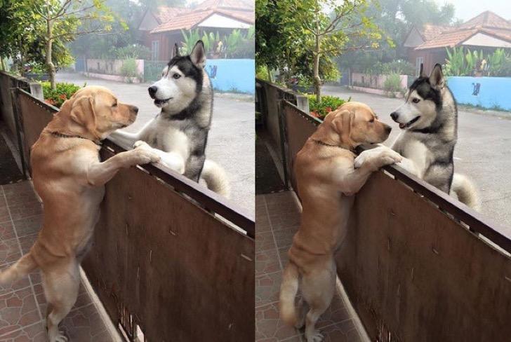 'Escapa' de casa para abrazar a su mejor amigo