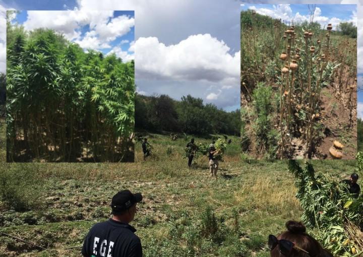 Valle de zaragoza destruyen droga