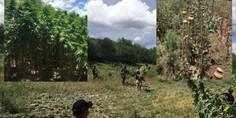 Relacionada valle de zaragoza destruyen droga
