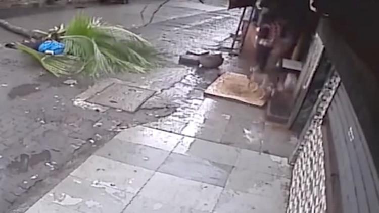 Volvía de yoga y murió aplastada por una palmera