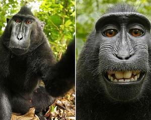 Medium selfie del mono