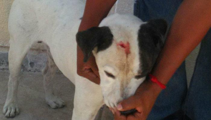 Golpeó sujeto con un martillo a un perro