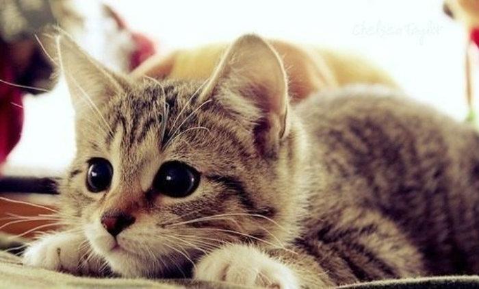 ¿Por qué se celebra el Día Internacional del Gato?