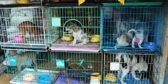Relacionada perros y gatos para venta
