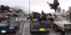 Relacionada eagleparty