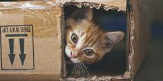 Relacionada gatos