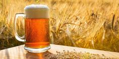 Relacionada cerveza cebada  1