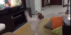 Relacionada perrito