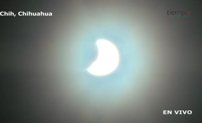Eclipse chihuhuahua