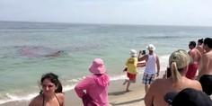 Relacionada tibur n devora a foca