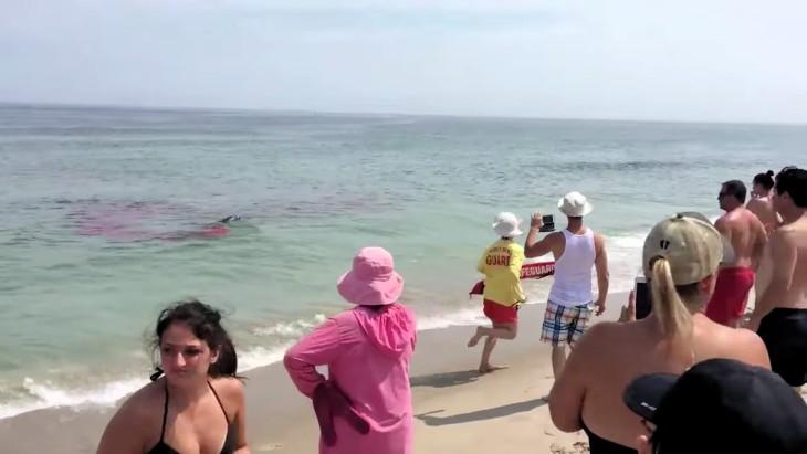Ataque de tiburón provocó pánico en bañistas de Estados Unidos
