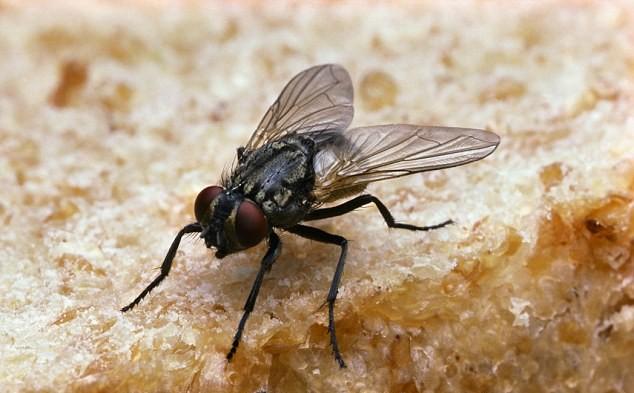 Flys Land On Food Good For You