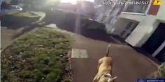 Relacionada perro