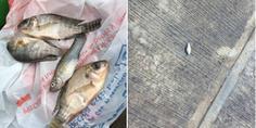 Relacionada peces