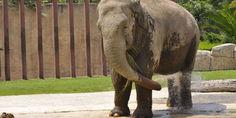 Relacionada elefante ely