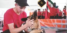 Relacionada rescate chihuahua