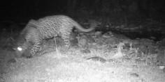 Relacionada jaguar 3