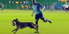 Relacionada video perro regatea defensa futbol