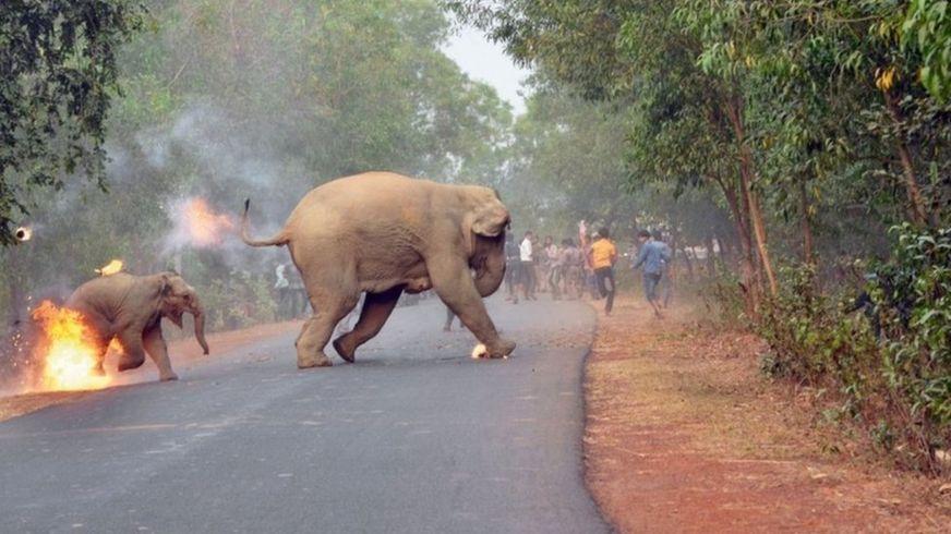 ¡Cruel imagen de una cría de elefante en llamas gana premio!