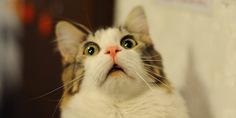 Relacionada gato robo  el celular de su duen a  para tomarse selfies
