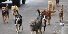 Relacionada perros callejeros