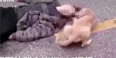 Relacionada perrito china