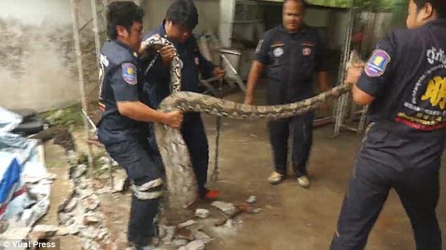Sintió una vibración, rompió el piso y encontró con una enorme serpiente