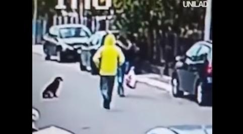 Perrito callejero frustra asalto y defiende a mujer de agresor