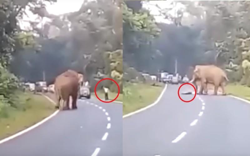 Fuertes imágenes: Quería selfie con un elefante y murió aplastado