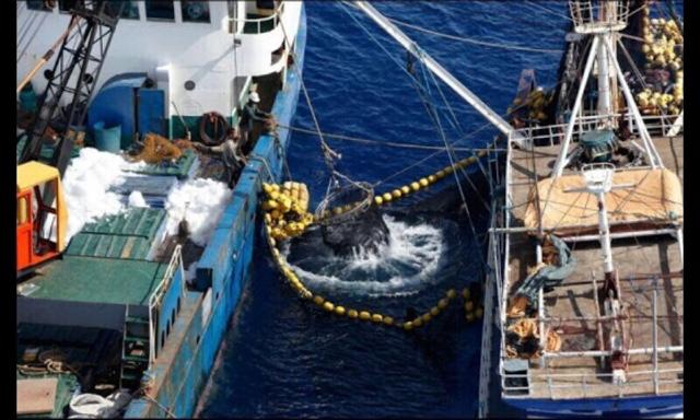 México apela decisión ante OMC por exportaciones de atún Lo último