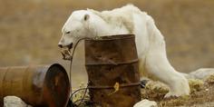 Relacionada osopolar