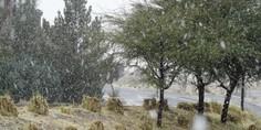 Relacionada nevada