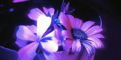 Relacionada ultra violeta1